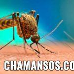 Biologa Descubre Combatir el Dengue con cafeina